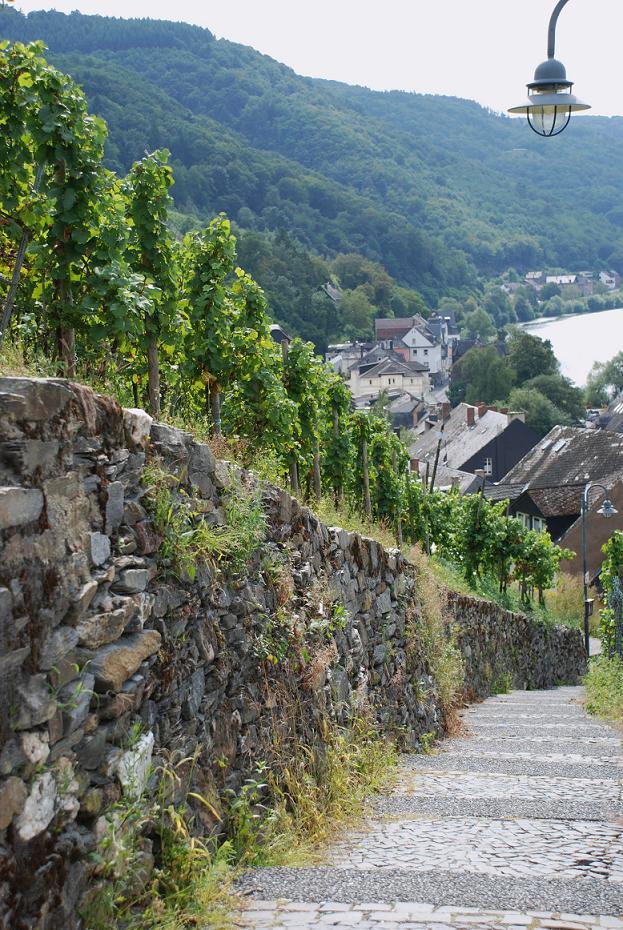 Wijnranken in Bernkastel-Kues